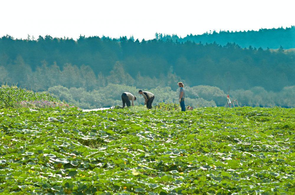 De juiste medewerkers voor agrarische functies